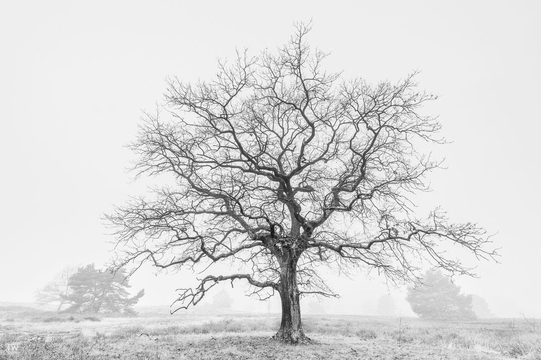 Diesen Baum fand ich sehr schön und im dichten Nebel gefiel mir diese SW-Umsetzung (B2324)