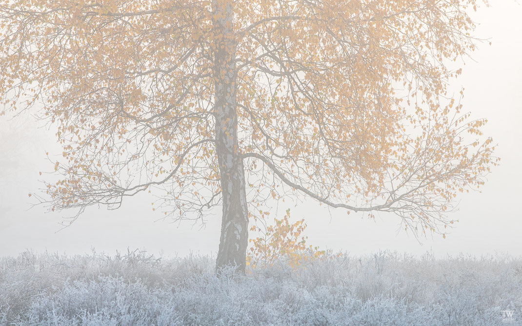 Frozen (B2280)