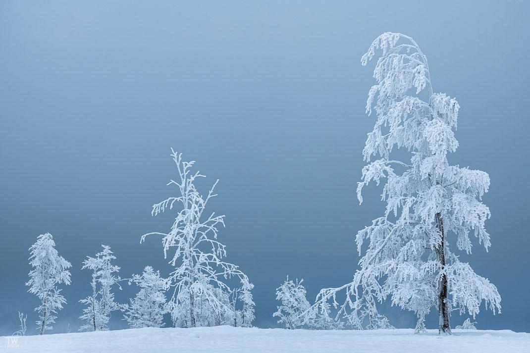 Blue as Ice (B2399)