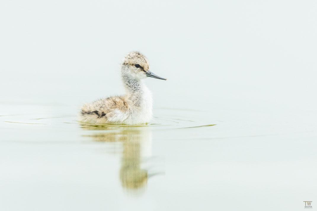 Und um diese süßen Geschöpfe ging der ewige Streit…hier schwimmend, da schon 15cm Wassertiefe zu viel war 😉 (B2048)