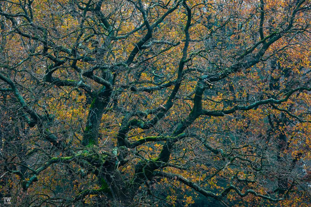 Einige Herbstfarben halten sich weit in den Dezember hinein (B2325)