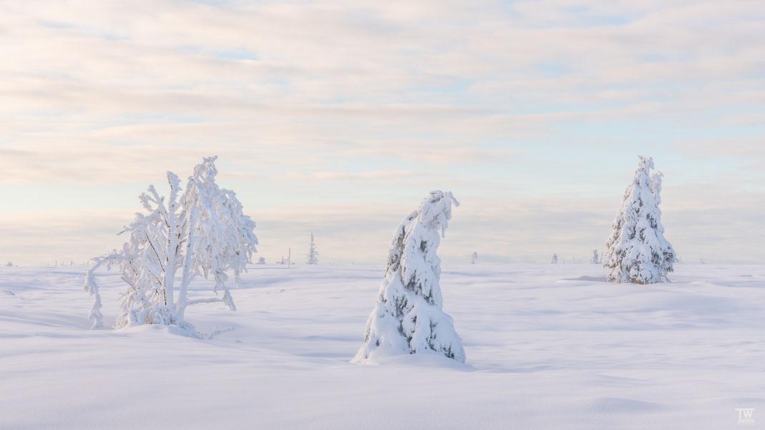 Selten hatte zuvor im Venn ich so viel Schnee gesehen; zudem war das Licht schon weit vor Sonnenuntergang sehr weich (B2432)