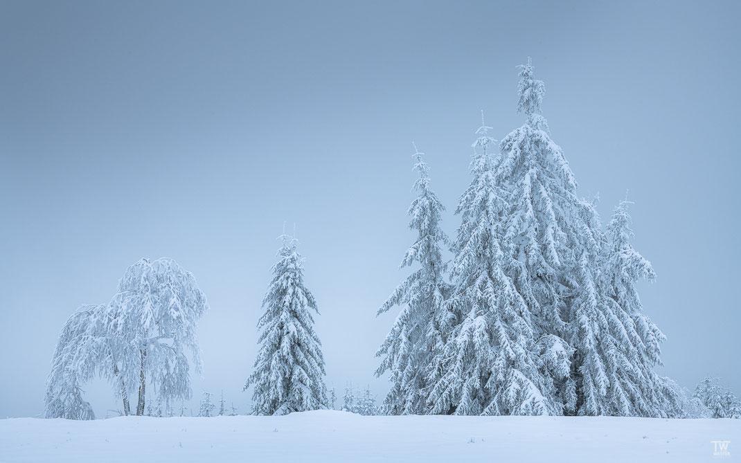Kurz vor dem nächsten Schneeschauer(B2355)