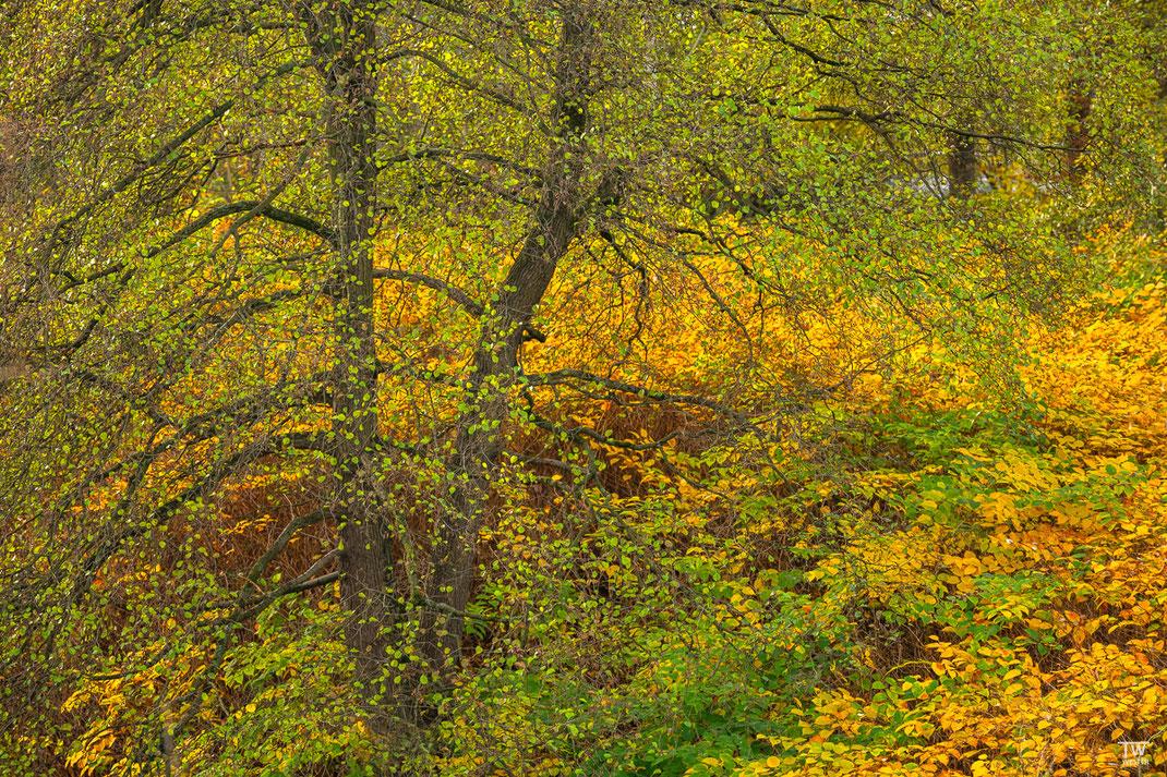 Herbstfarben am Fluss (B2267)