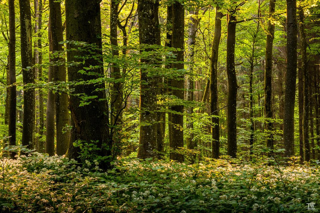 Im dichten Wald (B2001)