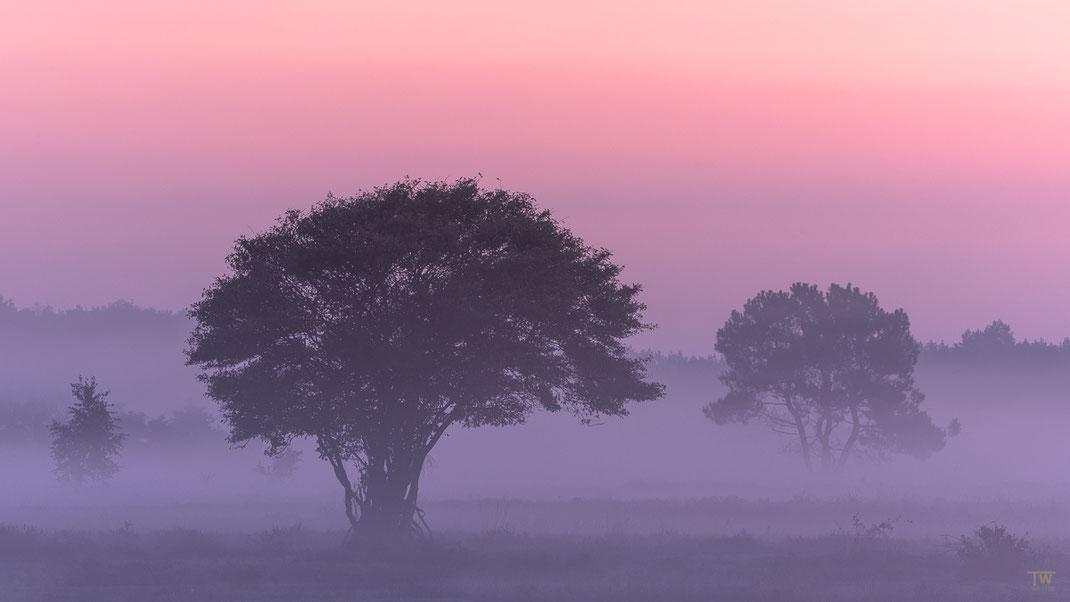 Vor Sonnenaufgang (B2251)