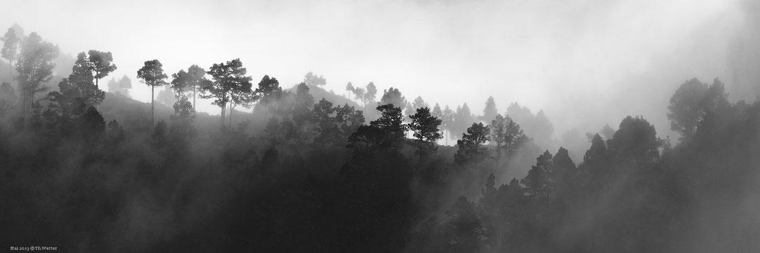 Nachtrag La Palma: SW-Ausarbeitung eines bereits gezeigten Fotos (B75)