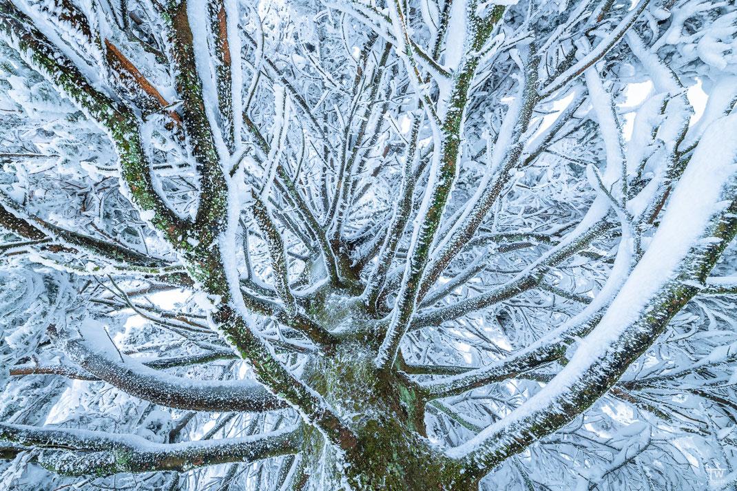 Frozen (B2378)