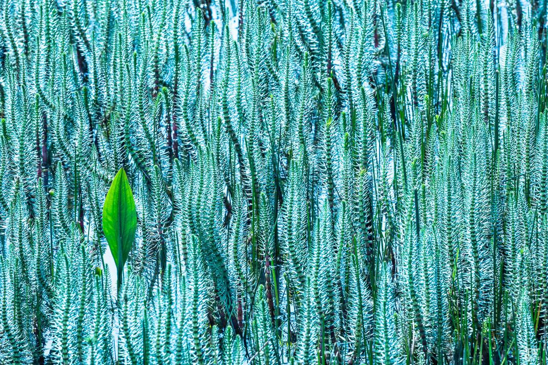 Abstraktes aus der Pflanzenwelt (B2614)