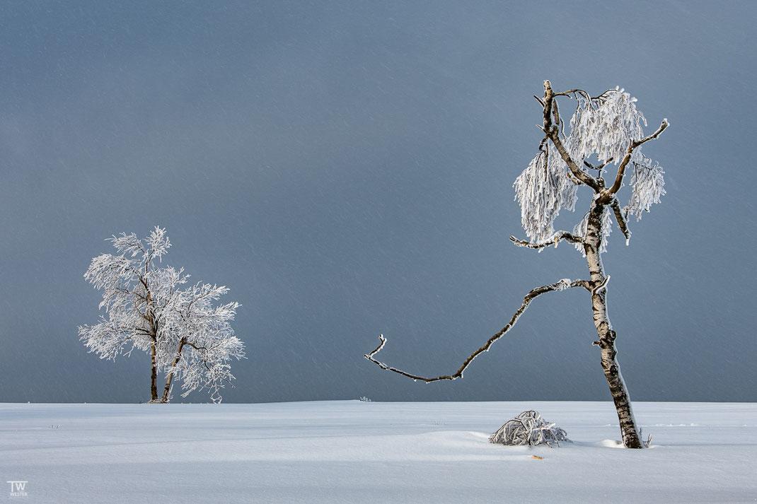 Im Schneesturm (B2443)