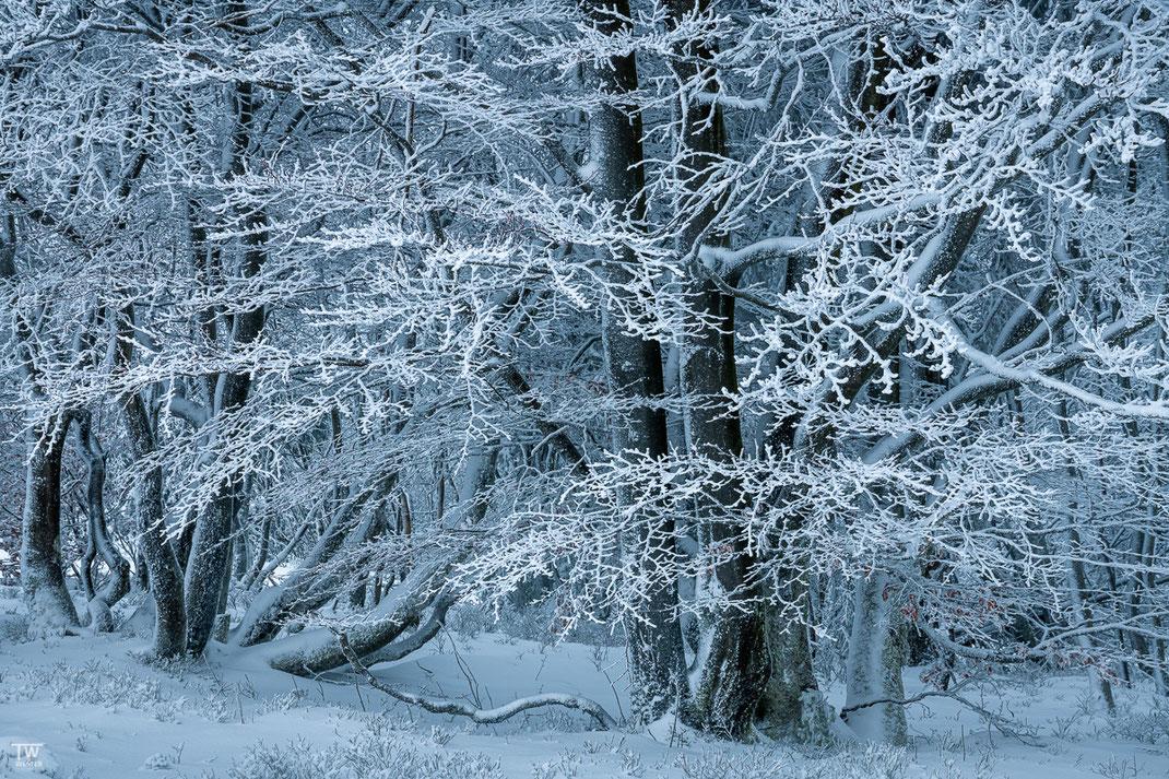 Die filigranen Äste des Waldrandes werden häufig wesentlich heller beschienen als der dahinter liegende Wald, was im Kontrast toll aussieht (B2330)