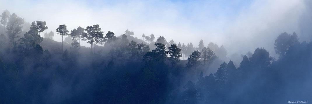 La Palma, in den Wolken (B21)