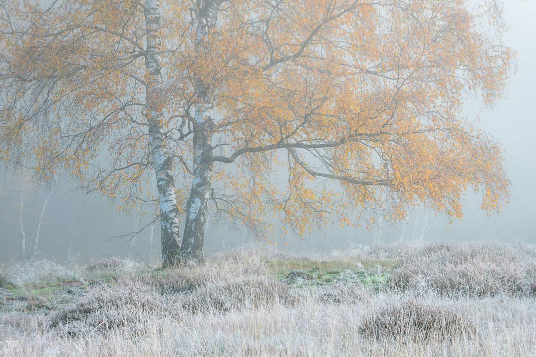 Highlight war ein Morgen, an dem die gesamte Heide gefroren war (B2288)