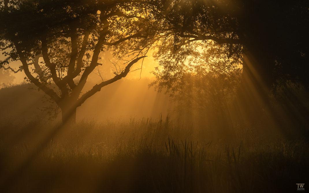 Durch den Nebel sichtbar (B2595)
