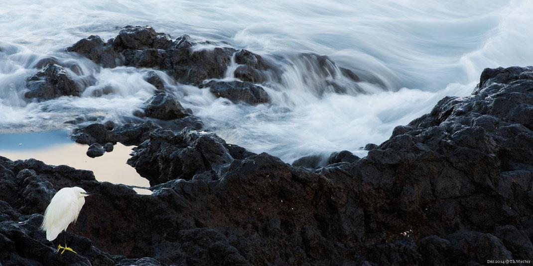 """Zurück """"auf den Boden"""": die vorherrschende Farbvielfalt an der Küste wechselt häufig nur zwischen schwarz und weiß (B238)"""