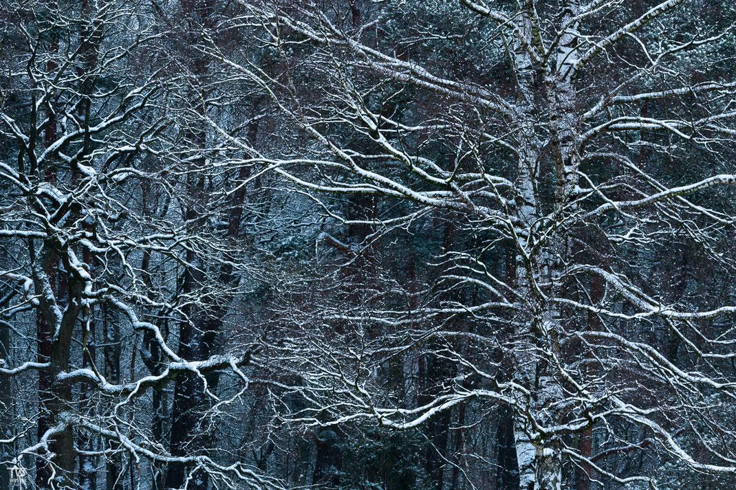 Winterstimmung (B2387)