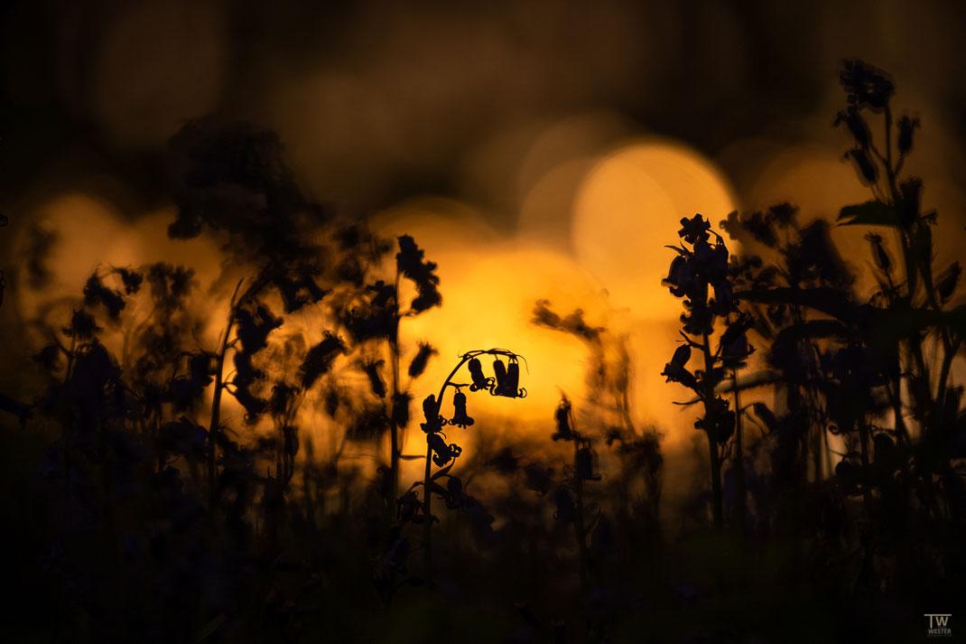 Noch im Dunkeln (B2552)