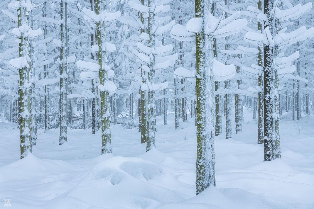 Tief verschneit – diesen Wald wollte ich schon öfter umsetzen, doch die Schneedecke muss schon verdammt hoch sein, damit die Schneedecke geschlossen ist (B2332)