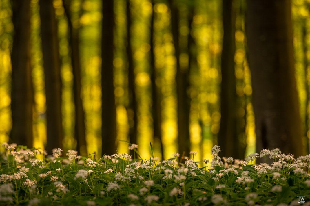 Lichtspiele im Blattwerk der Bäume (B2016)