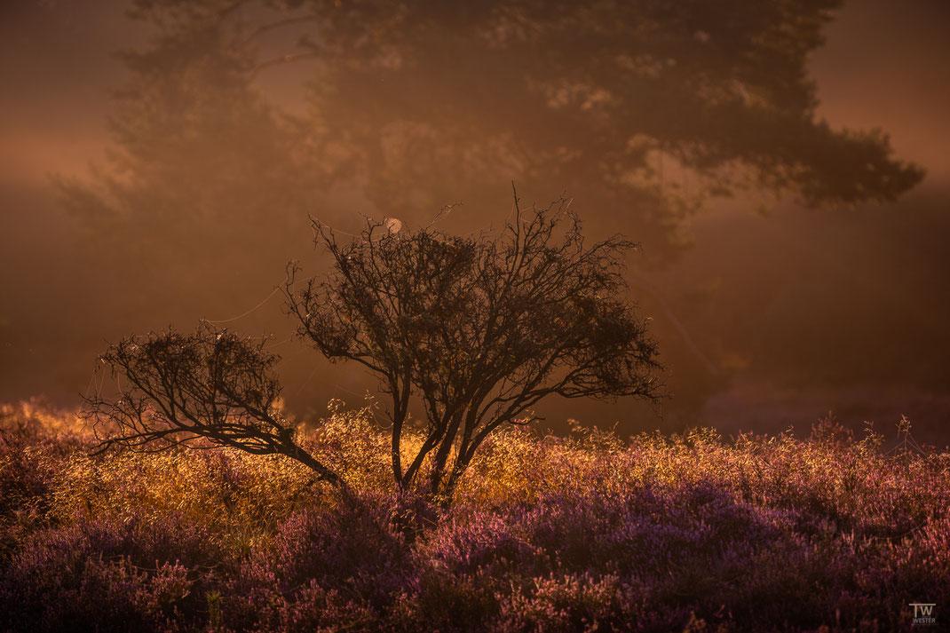 Junge Sträucher und Bäume im schönen Morgenlicht (B2192)