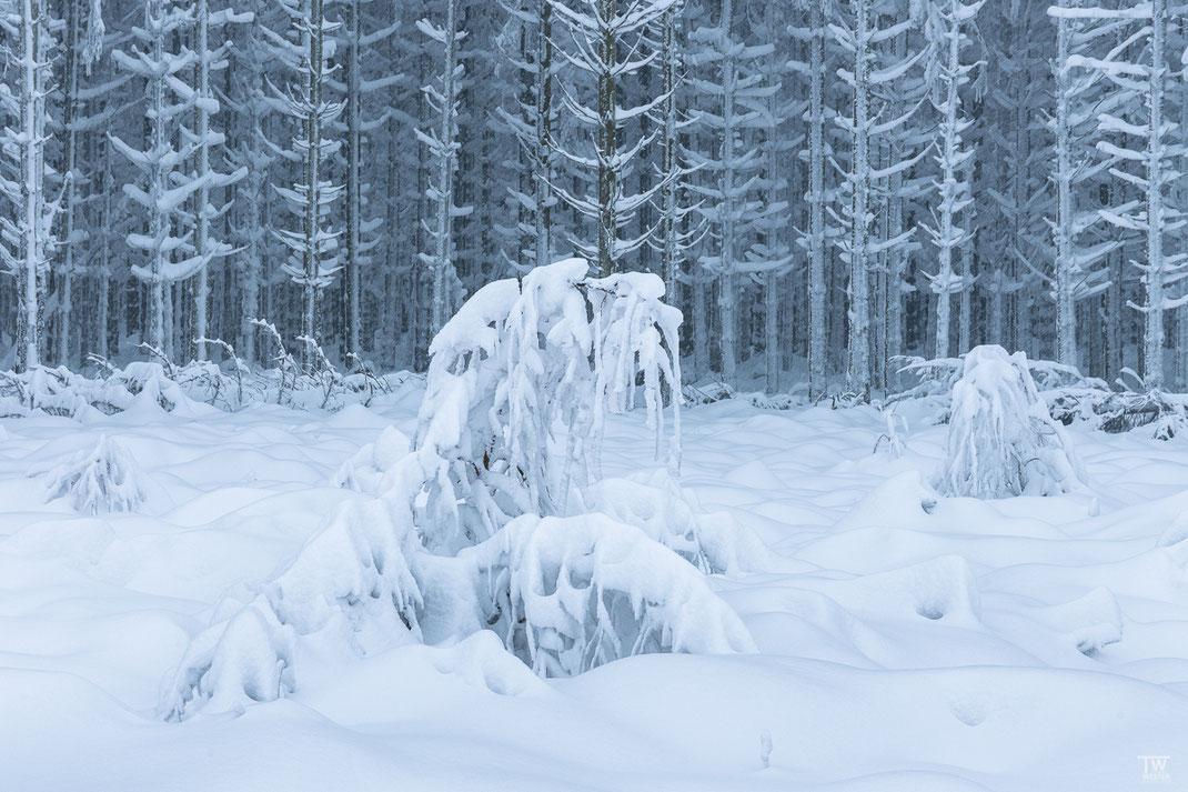 Das Schneemonster (B2451)