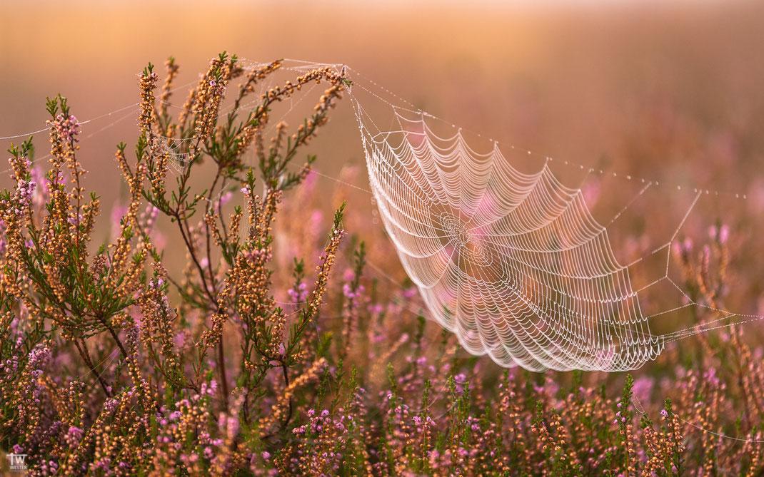 Auch die teils abgeblühten Pflanzen sind toll anzuschauen und bieten vielen Spinnen ein gutes Habitat (B2744)