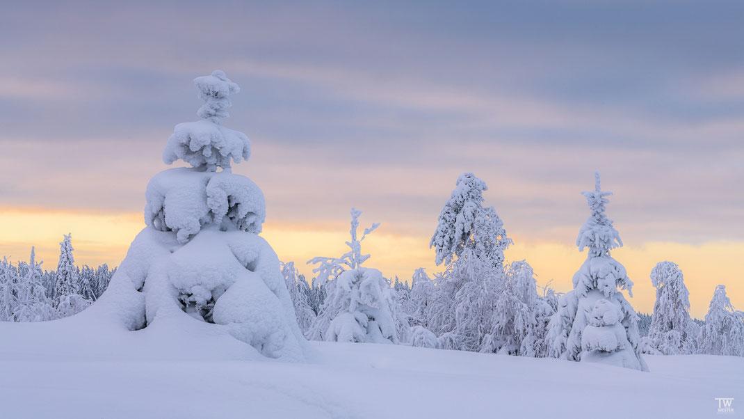 Die Schneetiefe an diesem Vormittag war enorm; erst ab Mittags taute es langsam. (B2438)