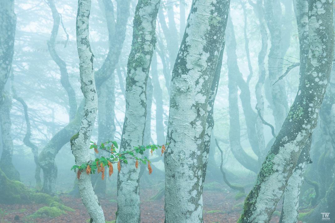 Mitten im Nebel (B2154)