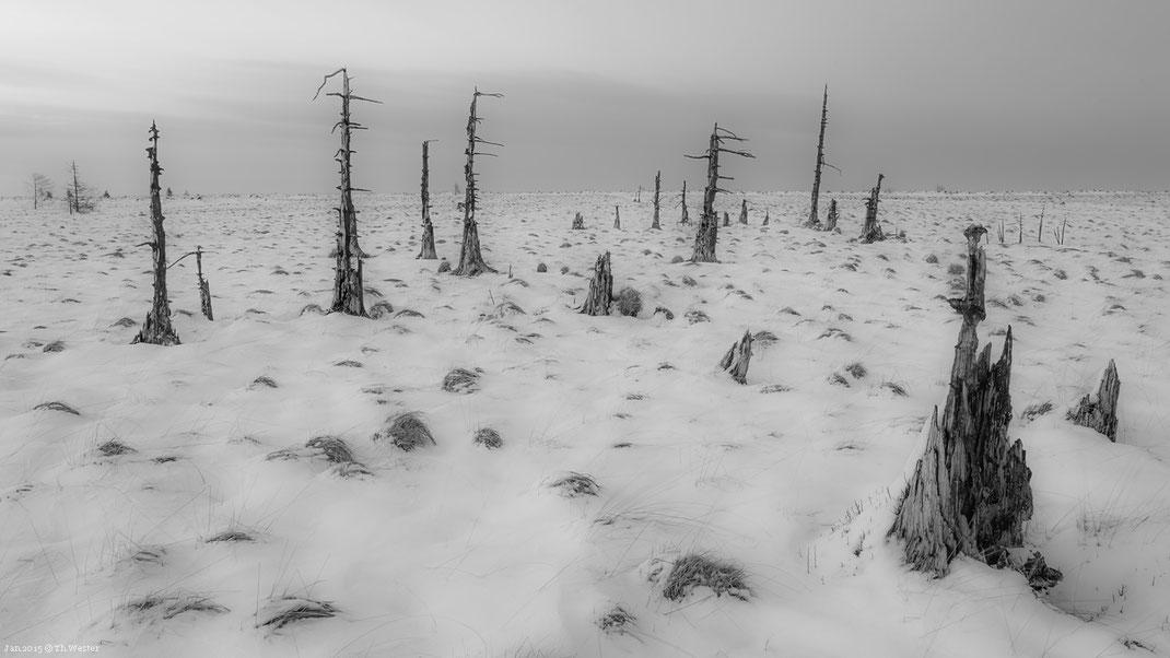 Die Landschaft im Hochmoor wirkt teilweise mystisch (B269)