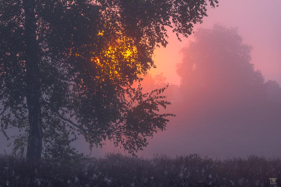 Sanftes Morgenlicht (B2180)