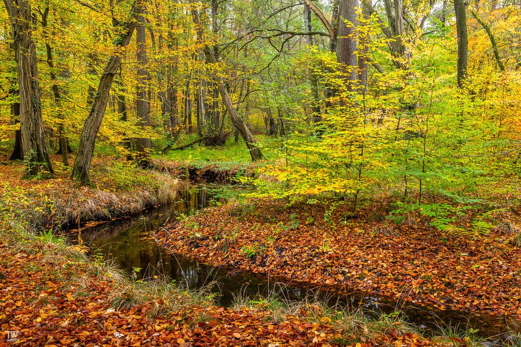 Unweit der Farnenwälder schlängeln dich die Mäander durch den Buchenwald (B2269)