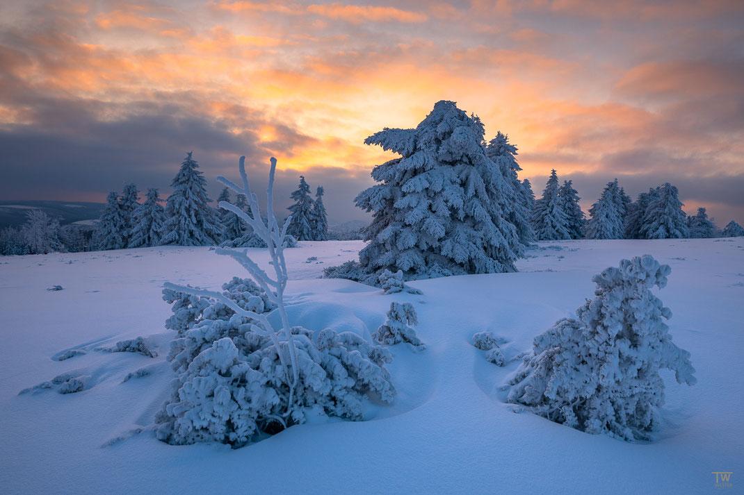 Und dieses war tatsächlich das letzte Bild am letzten Abend im Schnee, es war wunderschön (B2488)