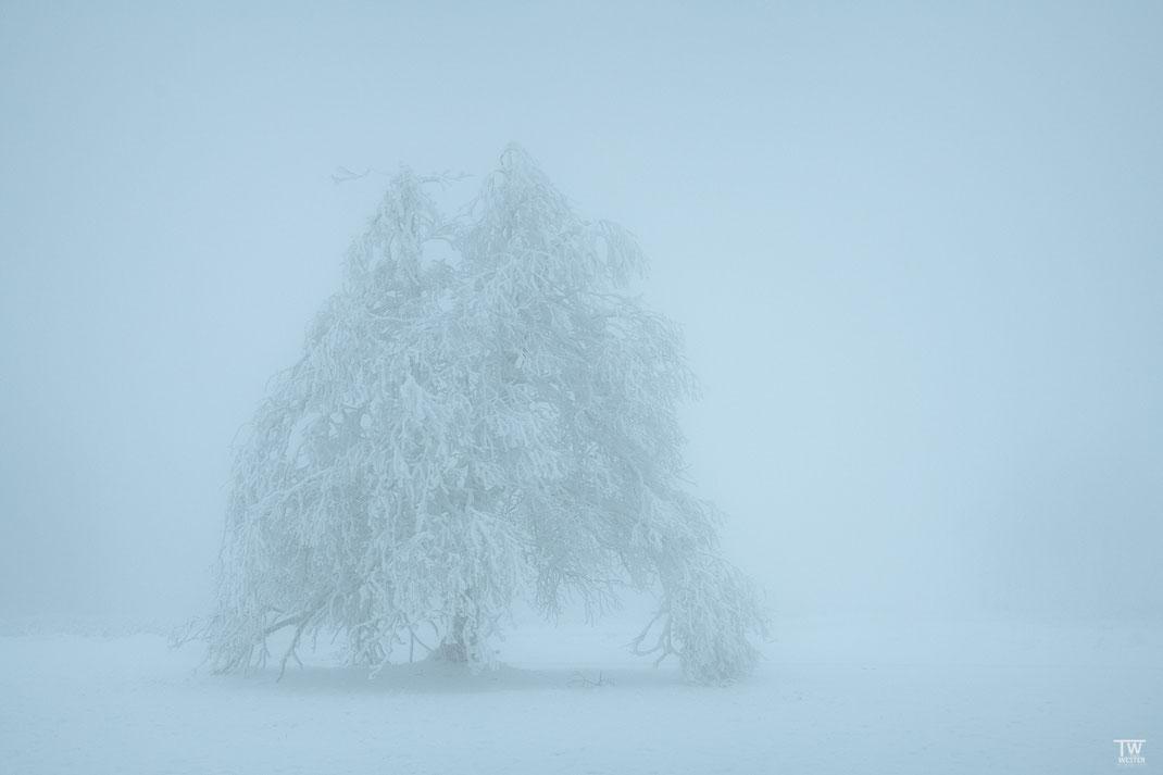 Im dichten Nebel (B2350)