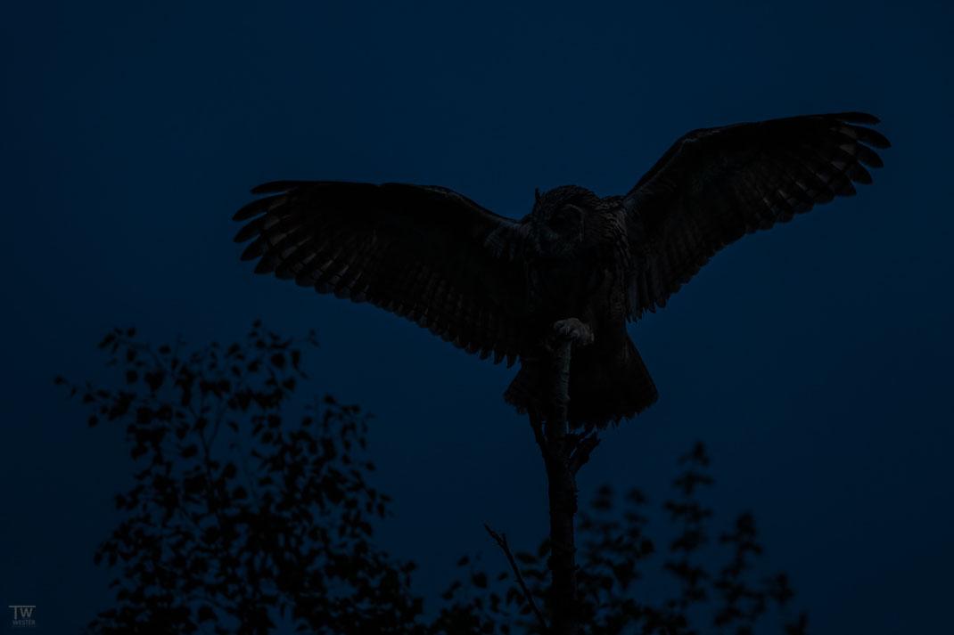 Kurz vor Abflug in den dunklen Wald (B2713)