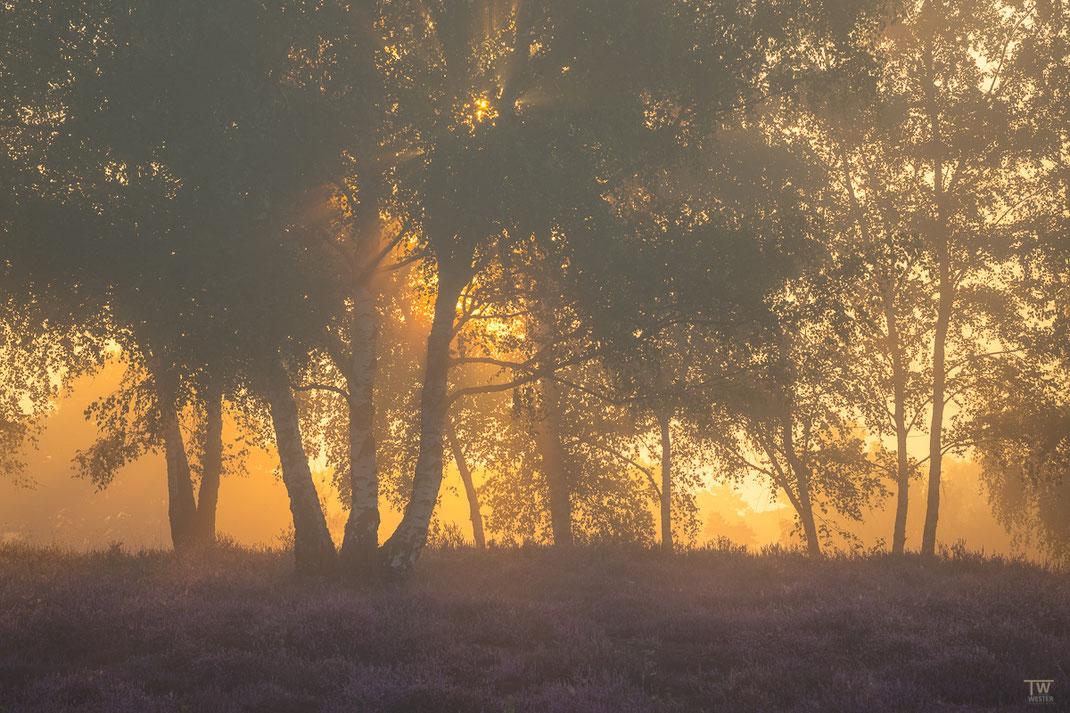 Kurz nach Sonnenaufgang wird dieses schmale Waldstück durchleuchtet… (B2748)