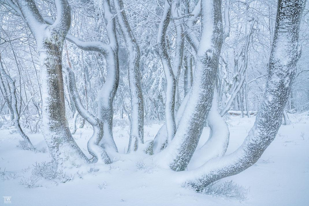 Im leichten Nebel fand ich diese schöne Baumgruppe (B2343a)