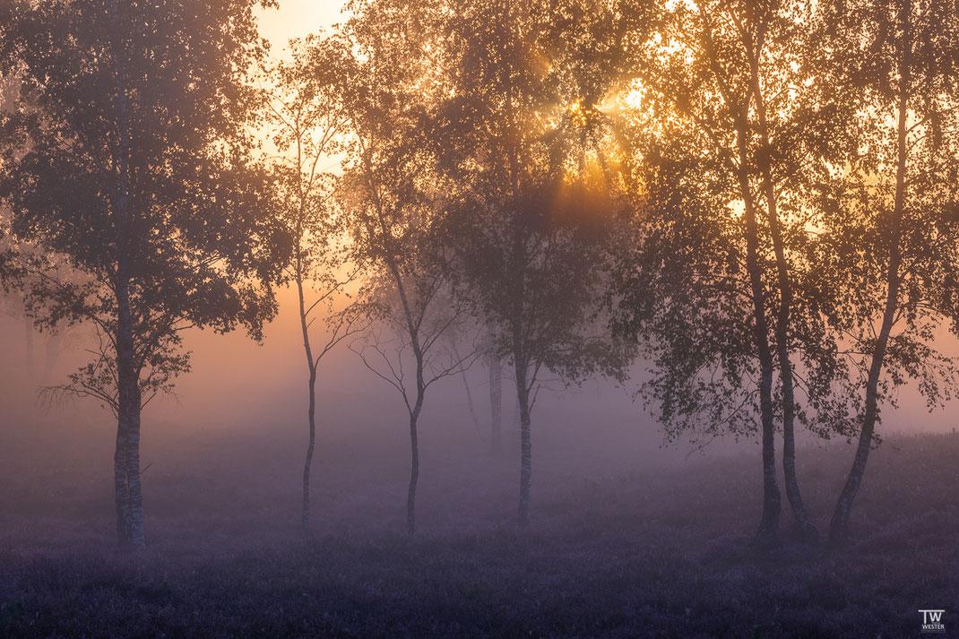 Langsam erschließen die Sonnenstrahlen dieses kleine Waldstück (B2173)
