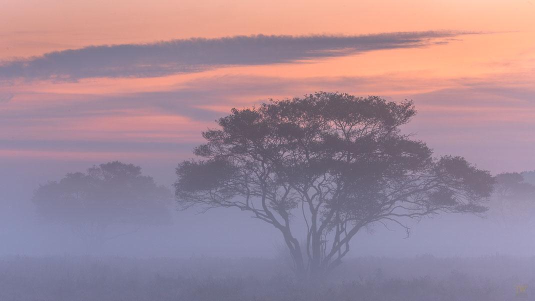 Die Warm-Kalt-Kontraste vor Sonnenaufgang mag ich ganz besonders (B2246)