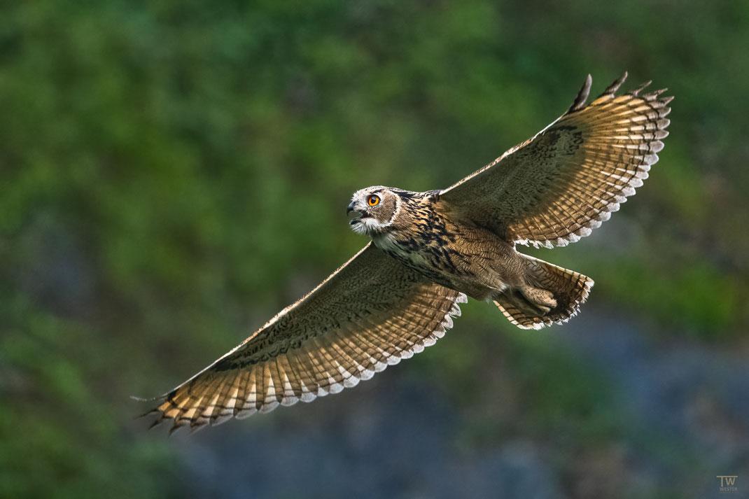 Doch auch wenn sie schliefen, konnte sie schon in der nächsten Sekunde wieder fliegen und wie hier nach den Geschwistern rufen (B2663)