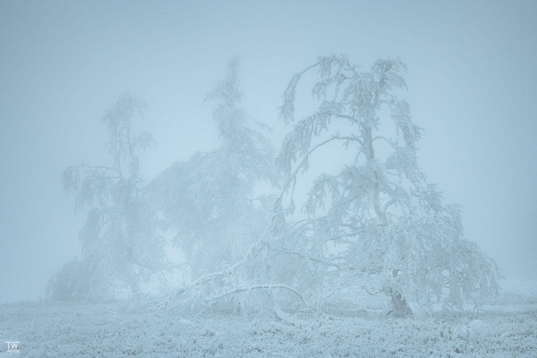 Zu Beginn war die Hochheide nur leicht mit Schnee bedeckt; früh morgens ergaben sich selbst bei 8000 Kelvin diese bläulichen Stimmungen, die ich persönlich gerne aufsuche (B2372)