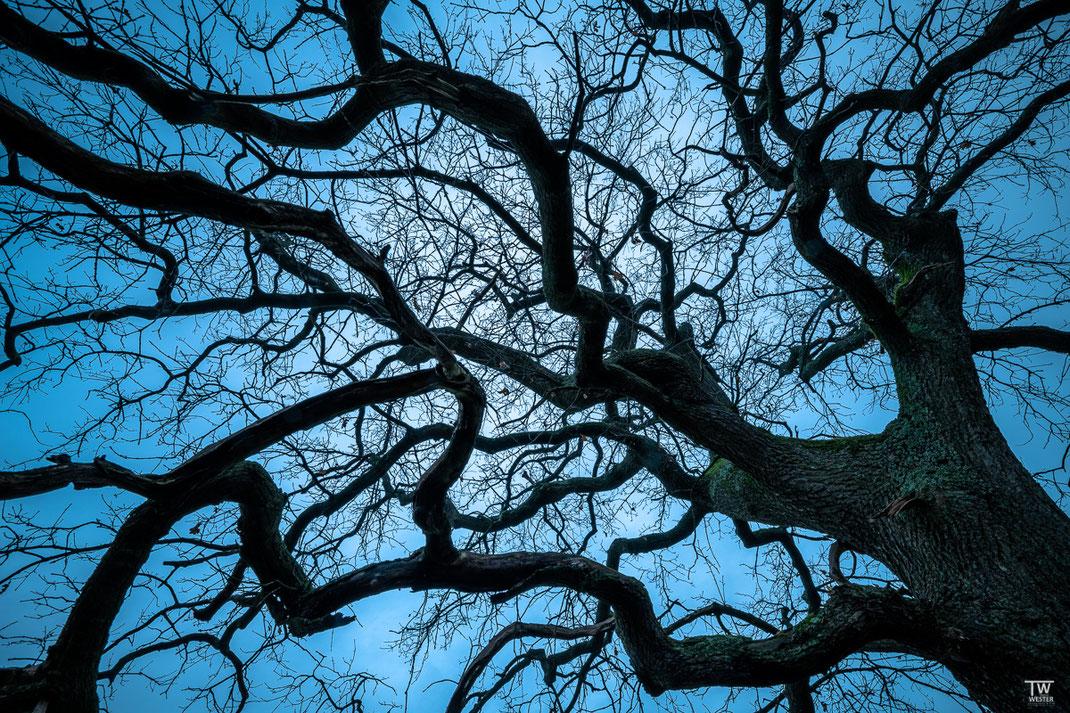 Die Äste dieses Baums fand ich faszinierend – in dieser Version zur blauen Stunde… (B2320)