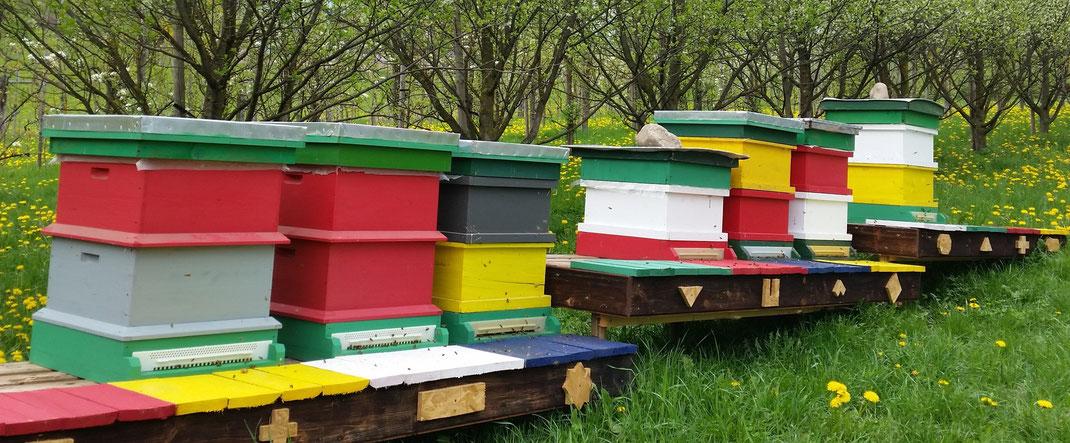 Der neue Freisteherstand im Obstgarten, neben der im Bau befindlichen Bienenhütte.