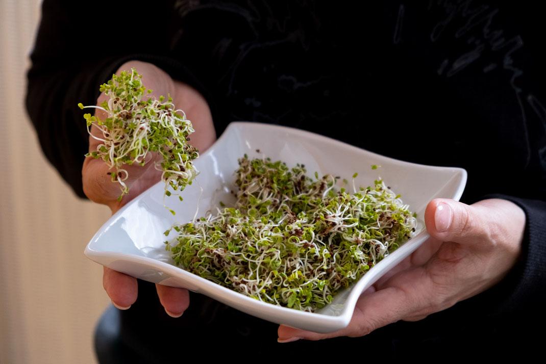Brokkoli & Brokkolisprossen sind für ihre heilende und vorbeugende Wirkung bekannt. Unter den Keimlingen sind die Brokkolisprossen in vielen Kategorien Spitzenreiter. Dank der wertvollen Inhaltsstoffe liefern sie einen Boost für das Immunsystem | Hot Port Life & Style | Deutscher Mode & Lifestyle Blog