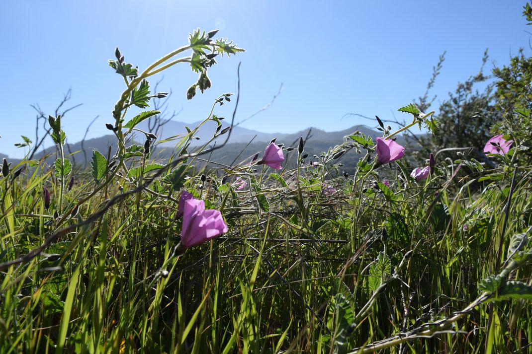 Teneriffa auf eigene Faust, Casa Madera, Blumen, Gräser