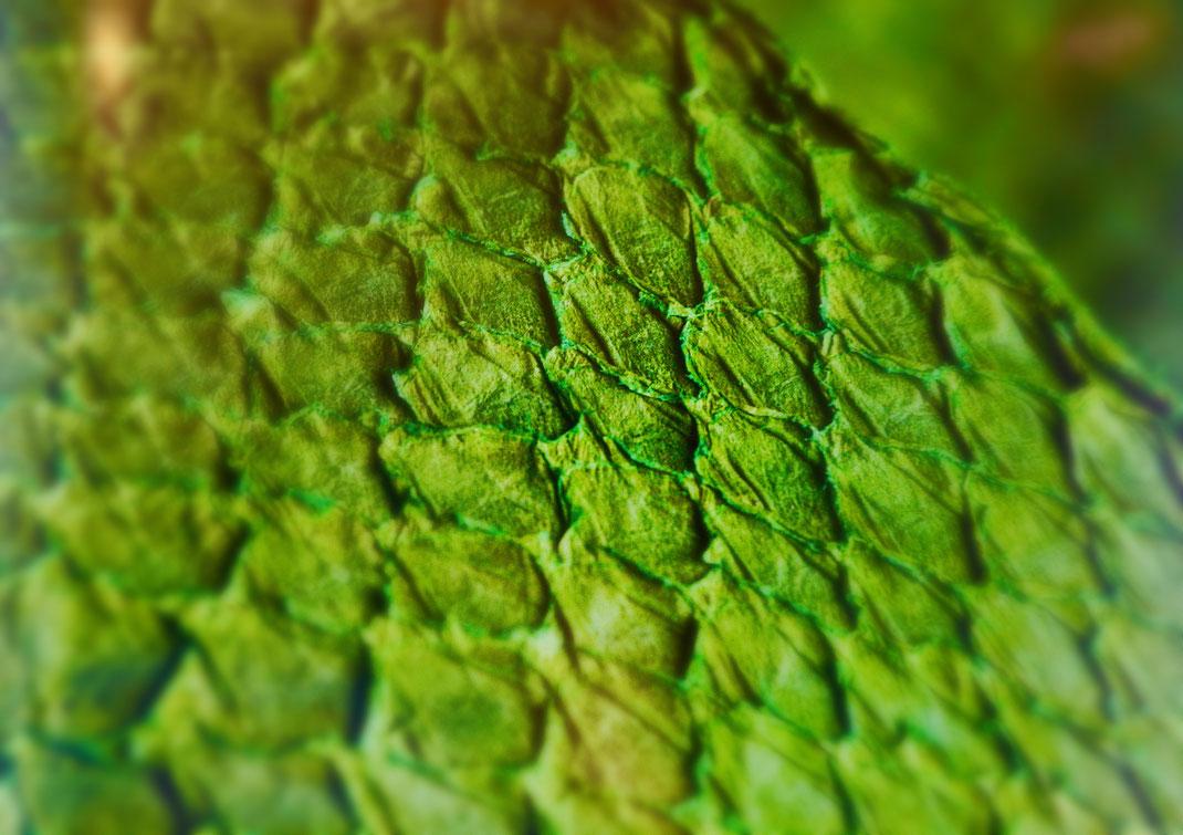 exklusive Fischhaut für Maßschuhe leuchtend grün Sonderdesign