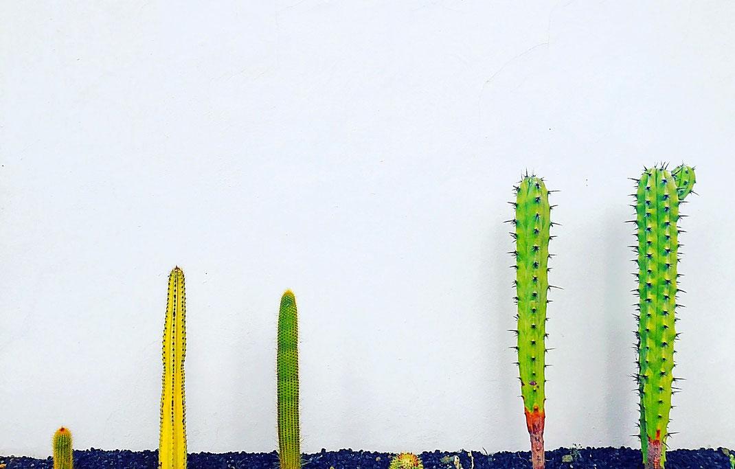 Cactus à Ténérife