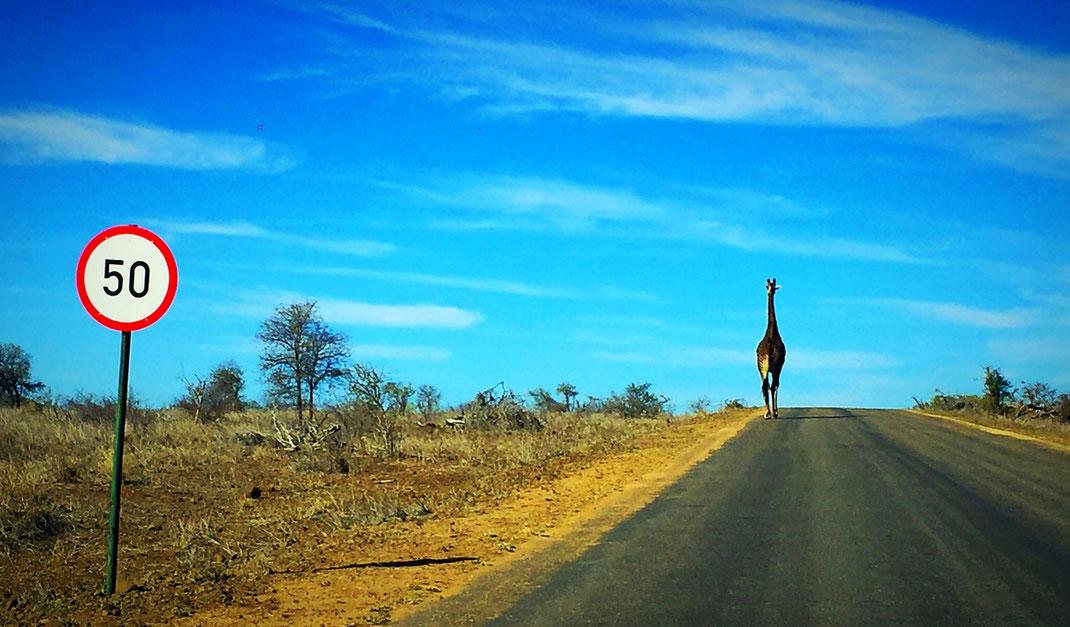 Sur la route dans le Parc Kruger