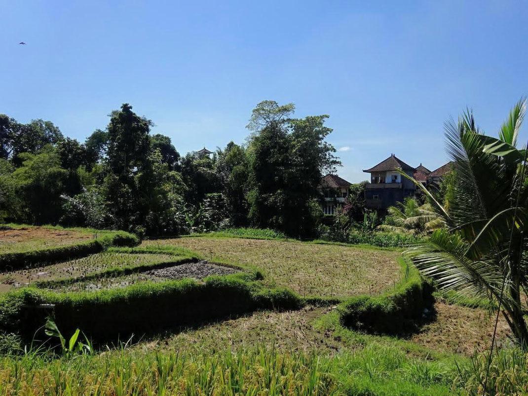 Ubud land for sale. Sayan land for sale