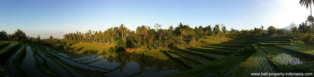 Land for sale Tabanan.