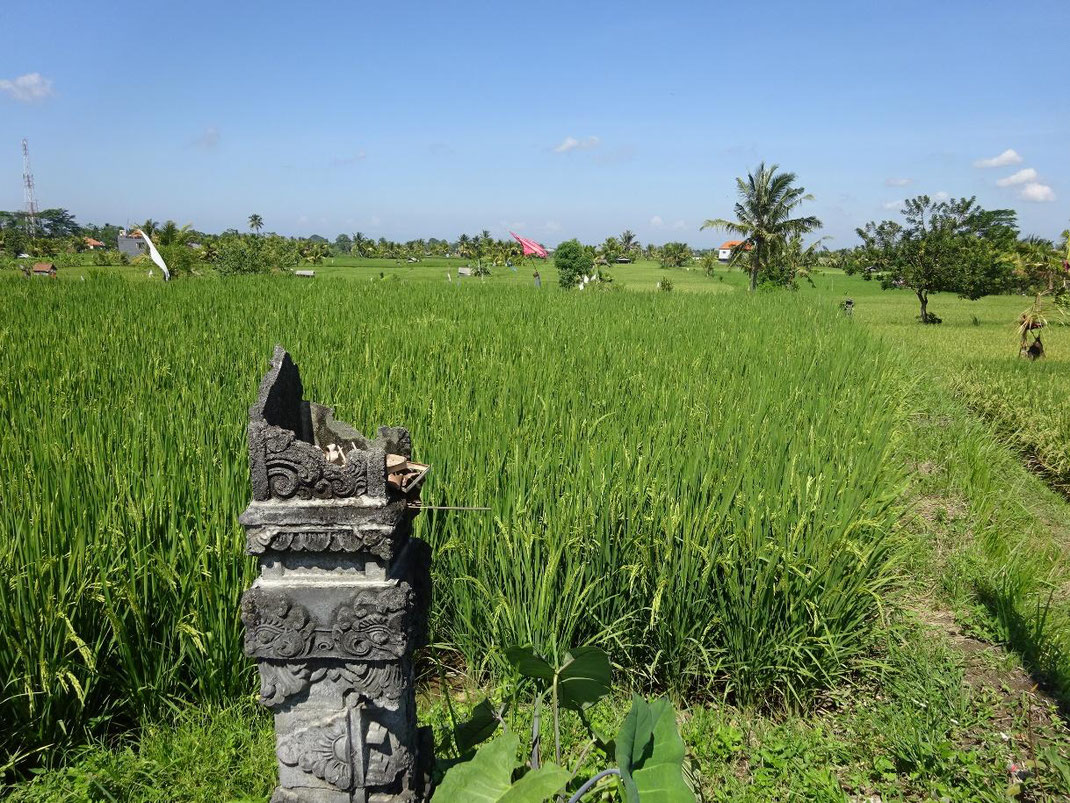 Ubud land for sale. Sayan land for sale